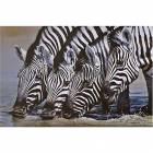 Printed Art Animal Zebra Thirsty Work by Pip McGarry